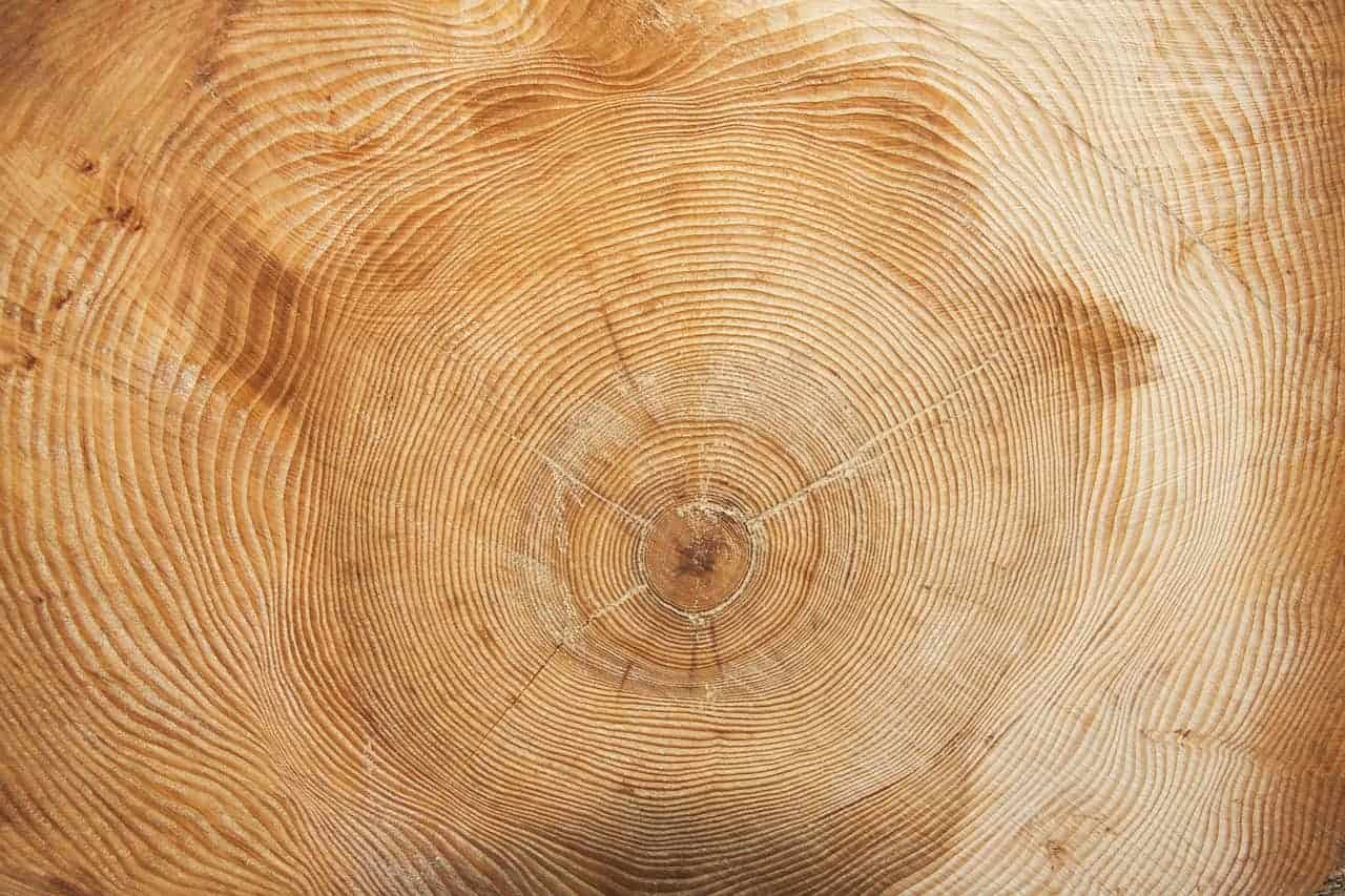tree-wood-grain--2